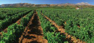 Viticulture, Greece