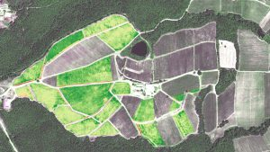 Canopy greenness map over Naoussa in 2015 derived from WorldView-2. Grape variety: Ksinomavro